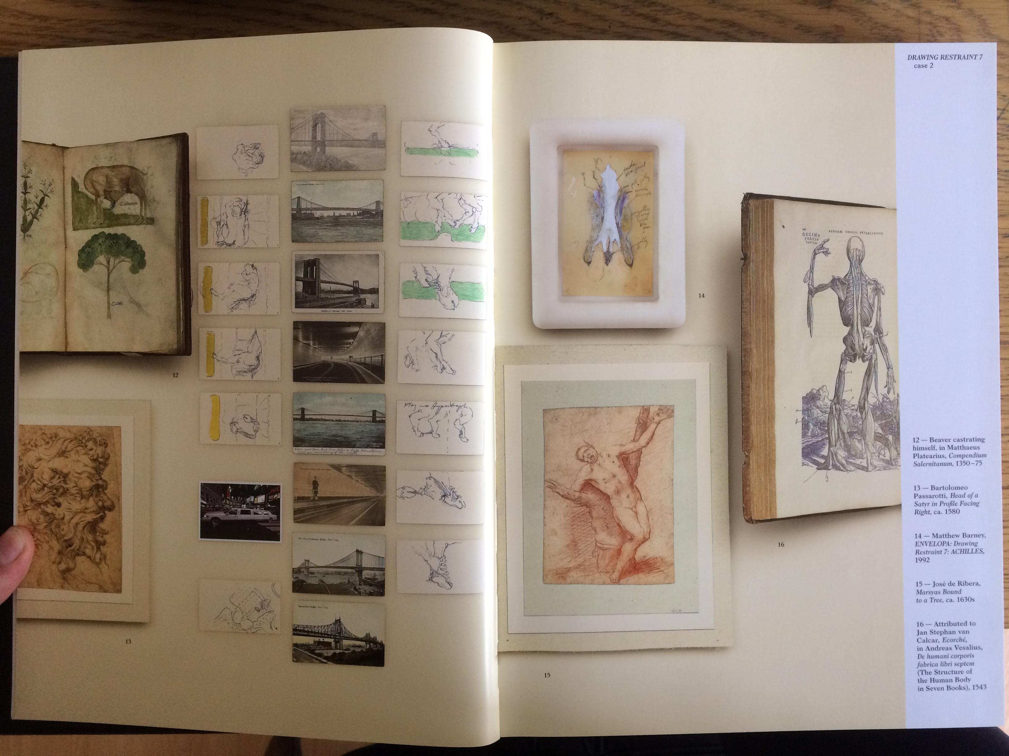 Cremaster Storyboards